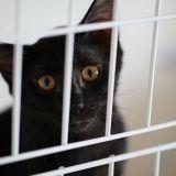 【獣医師が解説】猫が吐く理由は?異常かどうかの判断基準とは?