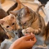 猫の多頭飼いで気をつけること!崩壊を防ぎ仲良く過ごす為に…