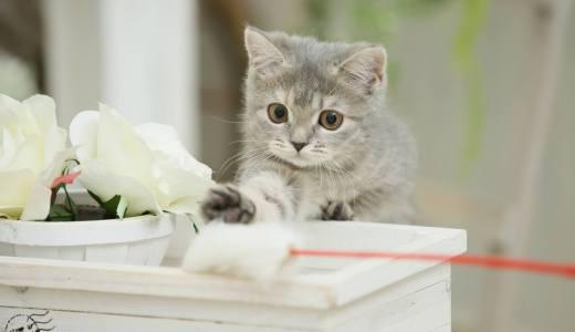 子猫と遊びすぎないで!子猫と遊ぶ時のやってはいけない注意点