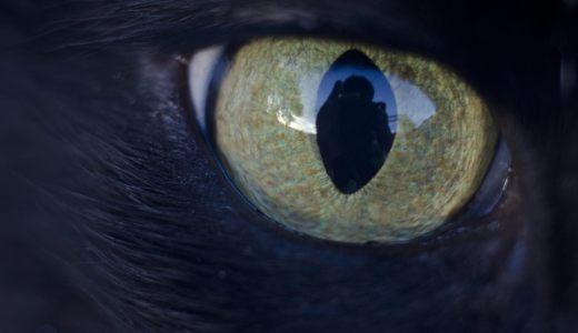 飼い猫に目やにが多い時に考えられる原因と対処法