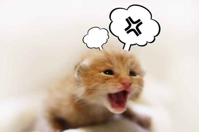 猫 ストレス ハゲ