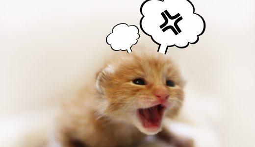猫はストレスでハゲる?!猫がストレスを感じやすいこと