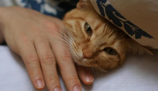 猫が添い寝してくる時の気持ちや添い寝の良い所、悪い所を解説!