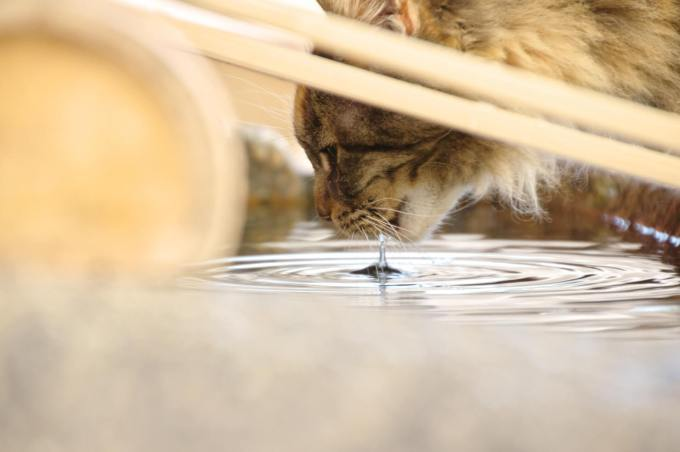 猫 飲み物