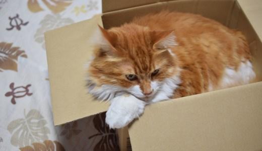 猫がダンボールを噛むのを止めさせたい!そんな時の対処法を解説