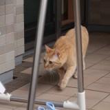 猫が脱走してしまった時に帰ってくる確率と探し方