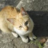 迷い猫を保護した時の対処法を解説!飼い主さんの見つけ方