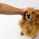犬が食糞してしまう原因を解説!食糞をやめさせる方法も合わせて紹介します