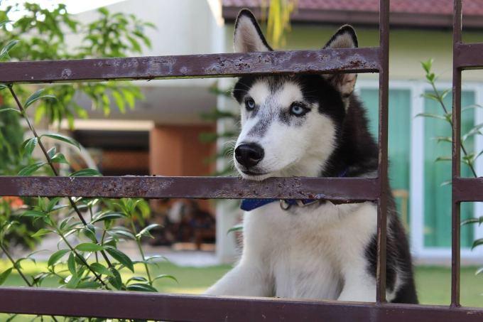犬 サークル 多頭飼い