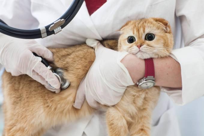猫 骨折 費用