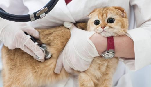 猫が骨折した時にかかる費用と治療方法を解説!