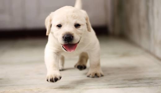 子犬がうんちをしない!そんな時の考えられる原因と飼い主が行いたい対処法