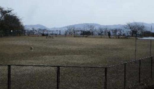 稲佐山公園ドッグラン|長崎県長崎市