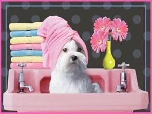 Professional Pet Grooming