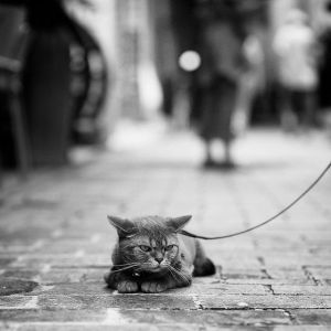 Walking Your Cat on a Leash!