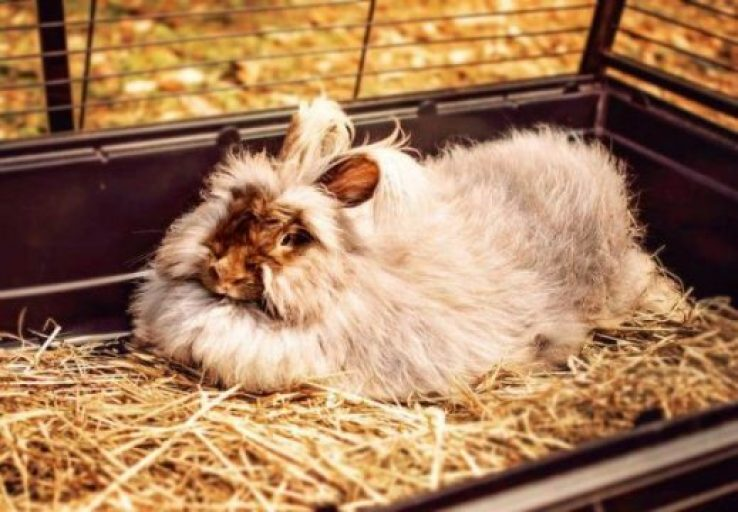 The Ultimate Guide To Rabbit Cage Flooring 2021