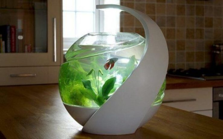 Best Self Cleaning Fish Tank – Complete Guide 2021