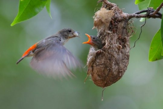 how to take care of a baby bird