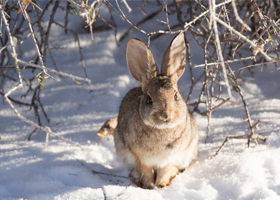 What to Feed Wild Rabbits in Winter?