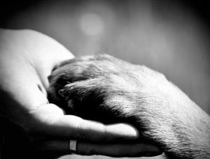 PetAftercareSearch.com Pet Euthanasia