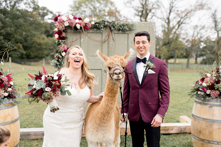 bride and groom laugh while posing with alpaca