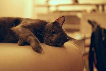gray cat sad.jpeg