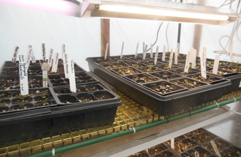 picture of seedtrays