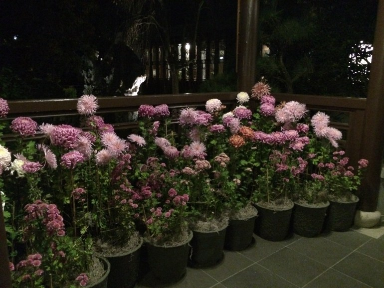 picture of specialty chrysanthemums