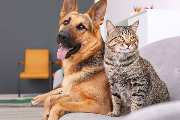 In home pet sitting visits