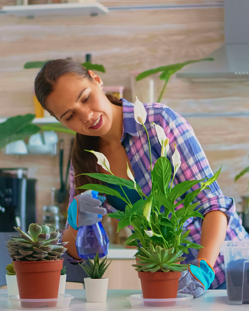 HOME CARE WATER PLANTS