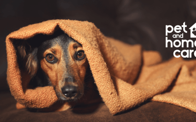 Treating Post-COVID Pet Anxiety
