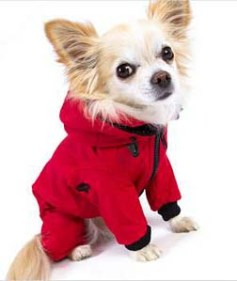 Red-Dog-Snowsuit-on-Chihuahua_lg