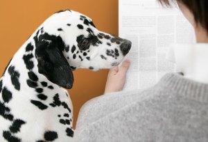 O seu cachorro precisa saber que o latido dele não é uma forma de chamar a sua atenção!
