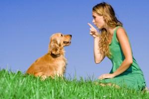 Tente ensinar comandos para que o seu cachorro seja mais educado!