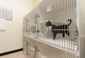 Deixar o seu gato em um hotelzinho para animais não é a melhor opção! Ele pode sentir muito medo e acabar tendo muitos problemas causados pelo estresse.