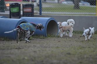 A praça Encol dispõe um cachorródromo para quem gosta de brincar com o pet e ainda ficar tranquilo