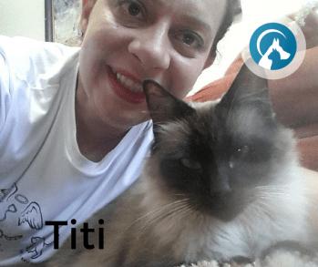 O seu gato precisa ficar no seu ambiente familiar para se sentir seguro quando estiver sem você!