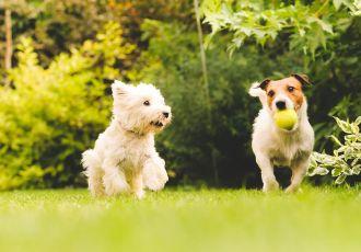 Cachorro Agitado - Pet Anjo
