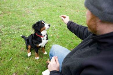 ensinar o seu cachorro a sentar 3