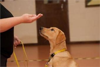 ensinar o seu cachorro a sentar 4