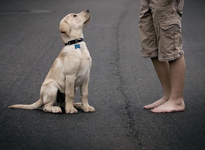 Ensinar cachorro não fugir quando abrir a porta