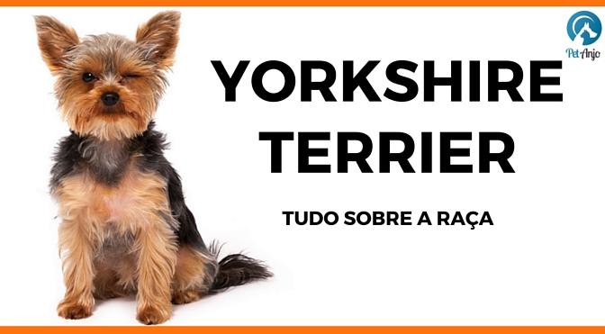 Yorkshire Tudo sobre a raça