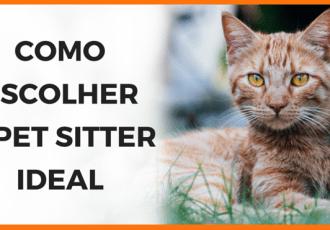 Como escolher o pet sitter ideal