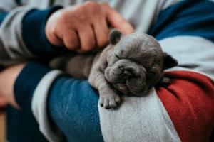 vale a pena contratar pet sitter