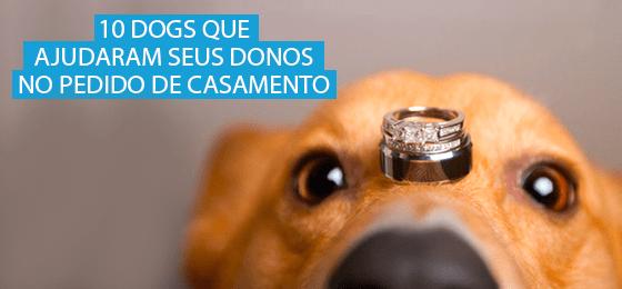 10 pets ajudam donos pedido casamento