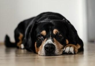 posso deixar meu cachorro sozinho em casa