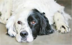 dog-walker-faz-passeios-educativos-com-cachorro-que-mora-em-apartamento