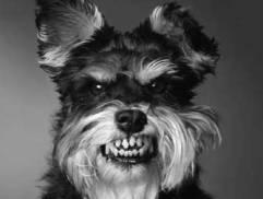 raiva em cão