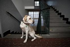 dog walker passeia e cuida de cachorro
