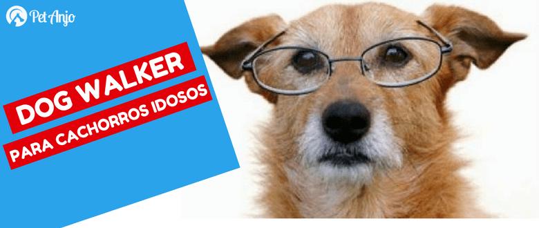 dog walker ajuda cães idosos com cuidados importantes